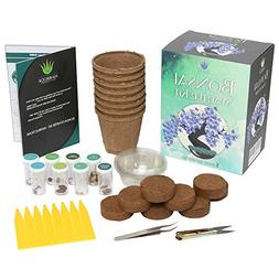 Bonsai Tree Starter Kit 8 Colorful Bonsai Easy To Plant And